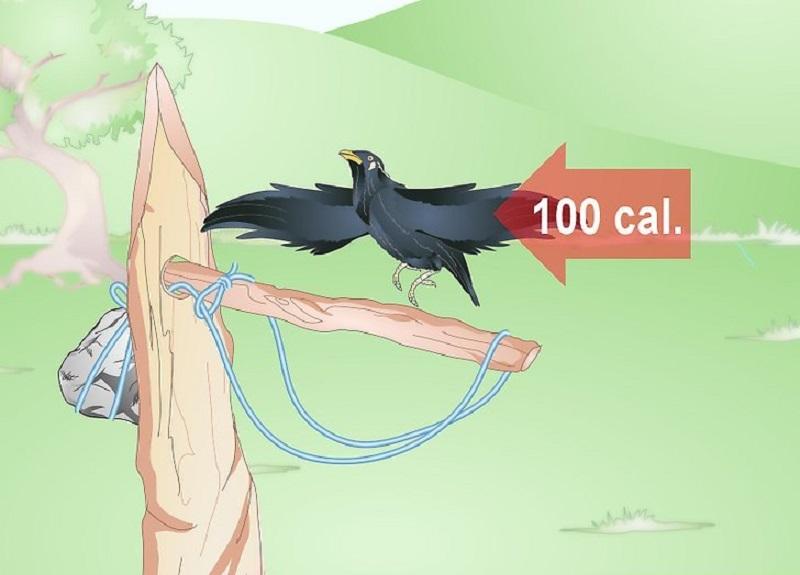 Kuş kapanı hazır olduğunda artık kuş yakalamak için kullanabilirsiniz.