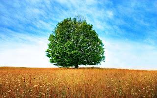 خلفيات اشجار طبيعية