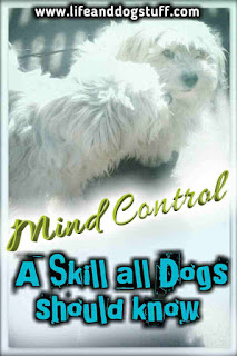 Mind Control - A Skill All Dogs Should Know