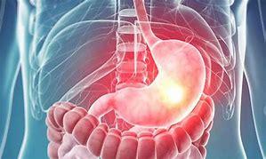 midenin diğer organlarla beraber görüntülenmesi