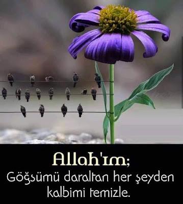 Allah'ım; Göğsümü daraltan her şeyden kalbimi temizle, amin, dua, içli dua, gönülden dua, kuşlar, çiçek, mor renk, telgrafın telleri, serçeler, sevda kuşları,