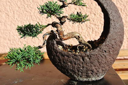 Maturing Methods for Growing Bonsai Trees: One Man's Tale