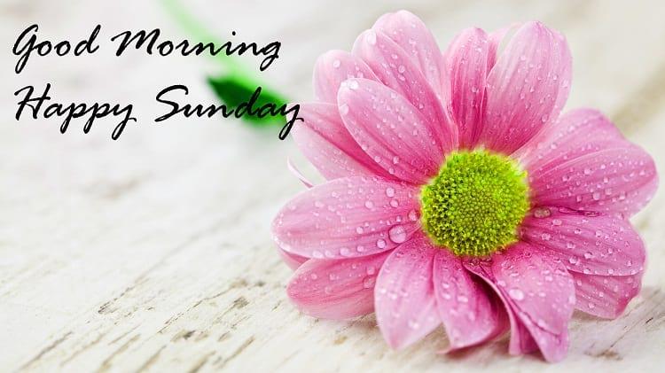 Good Morning Happy Sunday Flowers Image