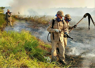 Bombeiros agem rápido e extinguem incêndio florestal no Pirpiri, em Guarabira, PB