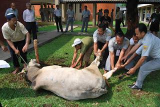 arti mimpi kurban kambing, arti mimpi kurban sapi, kurban dan aqikah, kurban unta, qurban adalah, kurban kambing untuk berapa orang, kurban idul adha, kurban dalam islam,