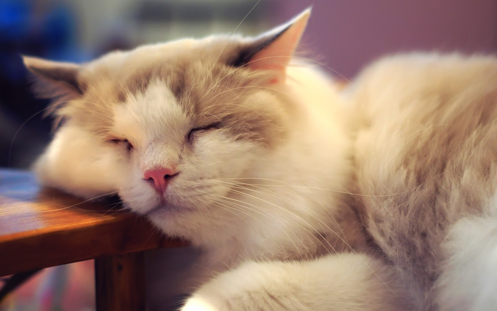 Cute Sleeping Kitten Wallpaper Proxecto Gato Cats Wallpapers By Bighdwallpapers