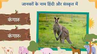Kangaroo name in sanskrit and hindi with images