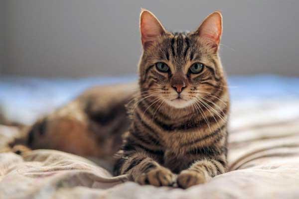 Fakta Seputar Kucing