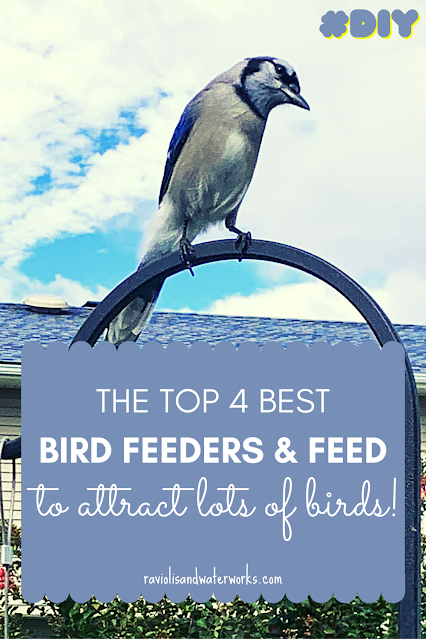 bird feeders you need to attract birds to your yard