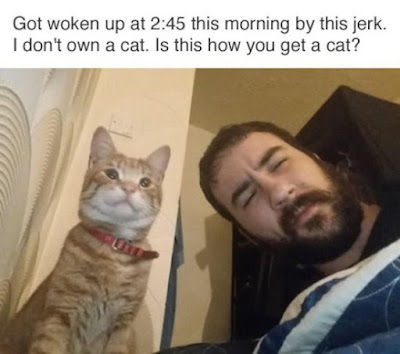 friday funnies, funny cat pictures, cat meme