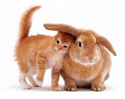 Imagen tierna gatito y conejo   www.klip7.com