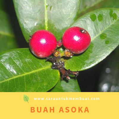 Buah Asoka