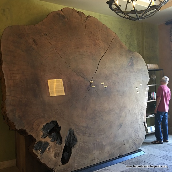 crosscut of ancient Sequoia tree at Allegretto Vineyard Resort in Paso Robles, California