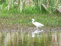 深北緑地公園 水辺のゾーン 野鳥