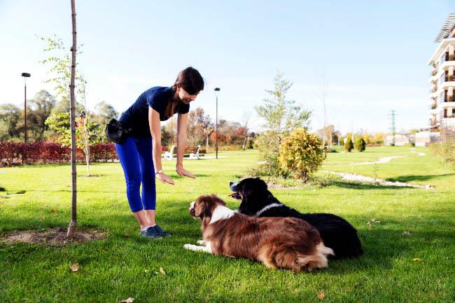 Jak nauczyć psa podstawowych komend?