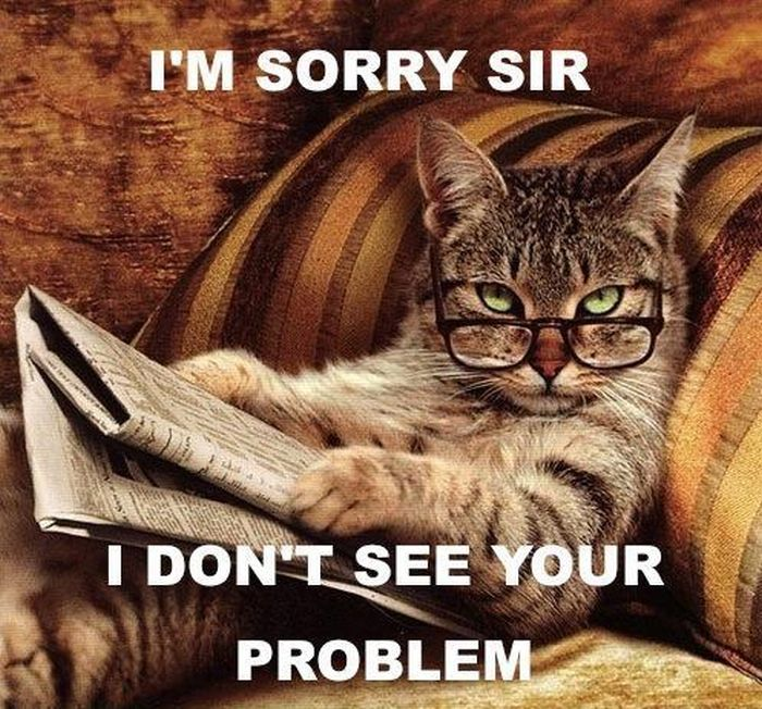 Funny Cat Memes: Damn Cool Pictures