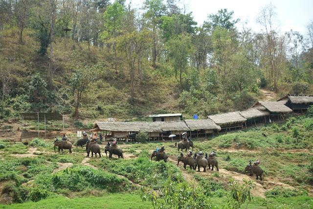 elephant, elephant ride, elephant camp, Chiang Mai