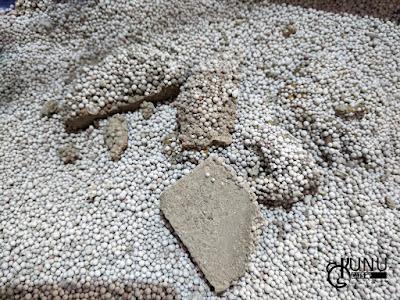 Penggunaan Pasir Gumpal Kucing Hari Ketiga