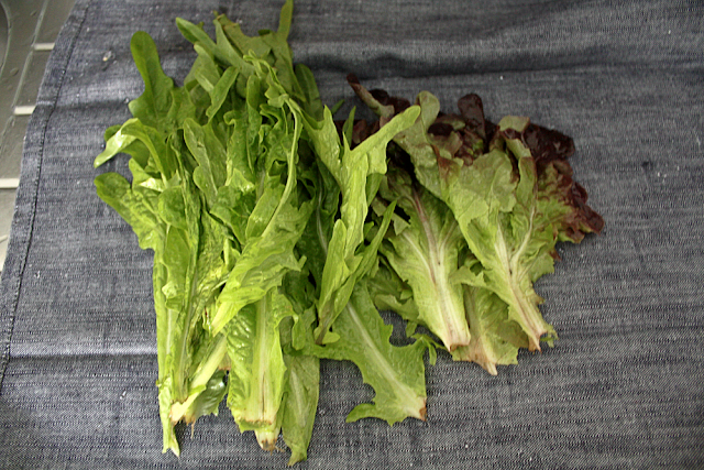 Store lettuce leaves in clean kitchen towel