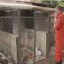 APÓS ANIMAIS CARENTES SEREM SALVOS POR BOMBEIROS DO PARANOÁ, EM SEGUIDA SÃO ADOTADOS POR MILITARES