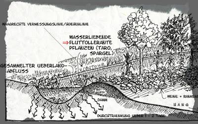 """Grafik: """"Wasserliebende, fluttollerante Pflanzen"""""""
