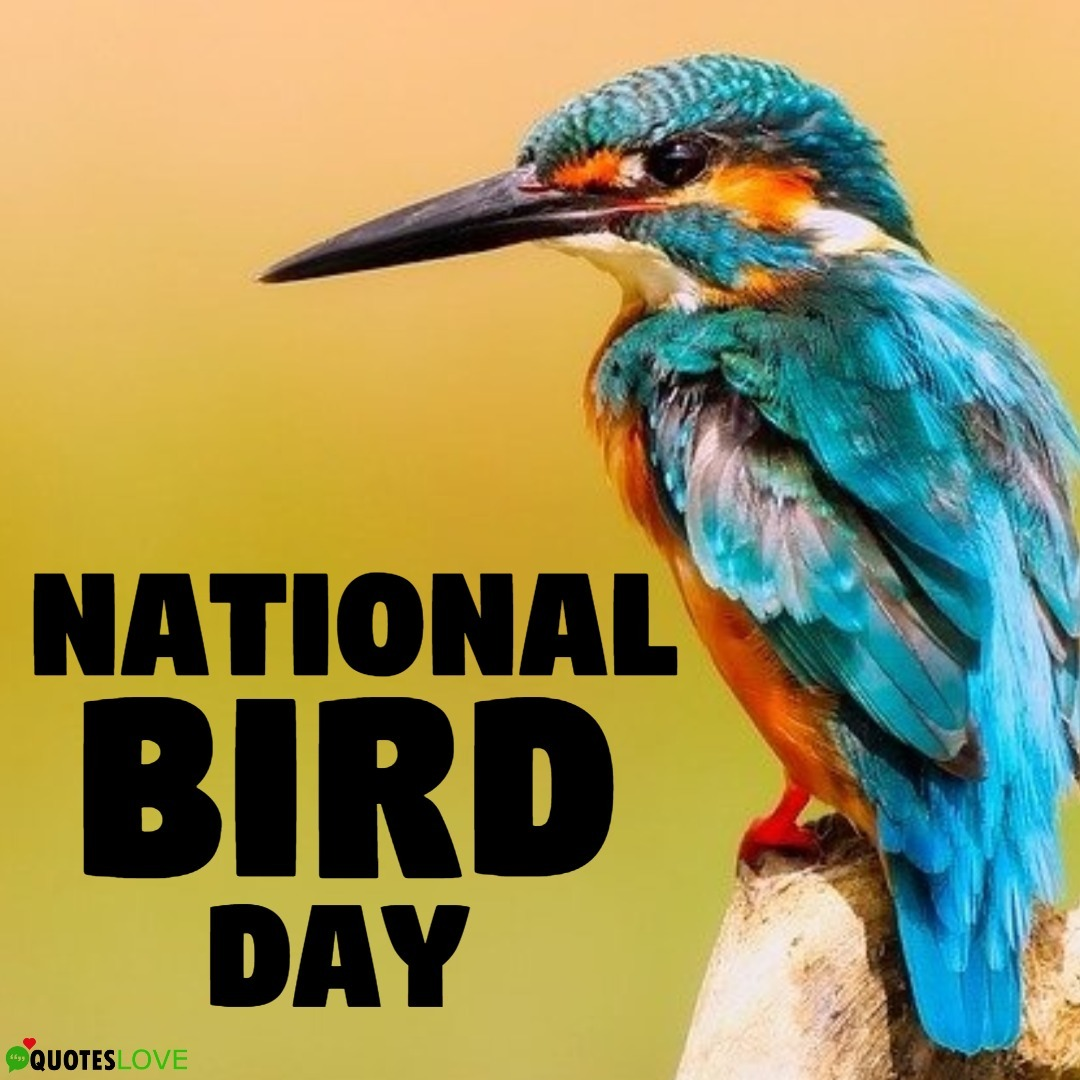 National Bird Day Images, Poster