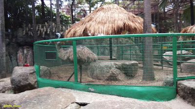 Mini Zoo on Nong Nooch