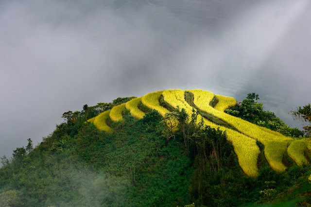 Splendid Golden Season in Hoang Su Phi 1