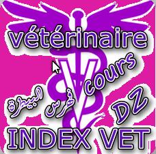 index info