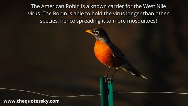 99+ American Robin Quotes [ 2021 ]