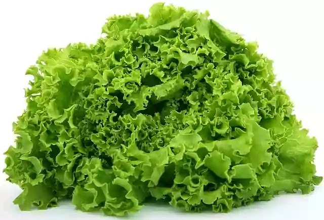 Top Health Benefits of Lettuce