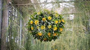 Desafiando al invierno: cestas colgantes con Guzmania, plantas en flor y plantas de interior en el invernadero de Longwood