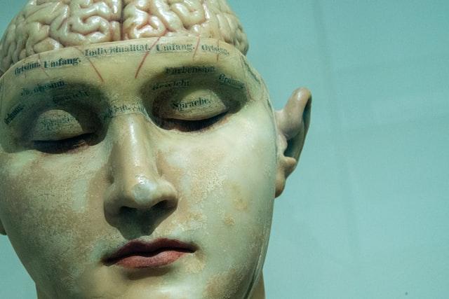 aprende ingles cabeza rostro cerebro modelo antiguo