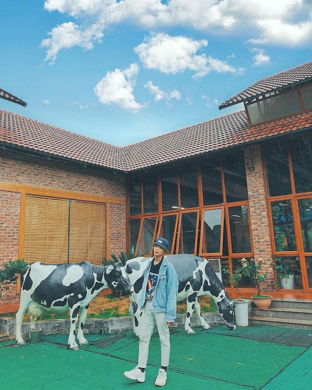 The beautiful check-in dairy farm in Moc Chau attracts young people