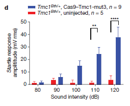 Increase in hearing abilities in mice treated with gene editing technology (blue)  versus no increase in untreated mice (red)