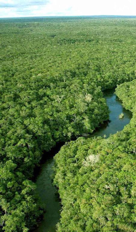 A luxuriante vegetação da floresta amazônica não engana os entendidos: a Amazônia não é o pulmão do mundo