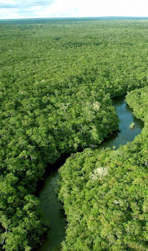 Se liberar todo o CO2 da Amazônia o efeito na atmosfera seria mínimo
