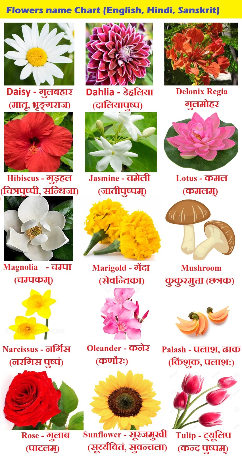 Flowers name Chart in Hindi Sanskrit and English - Flowers Name