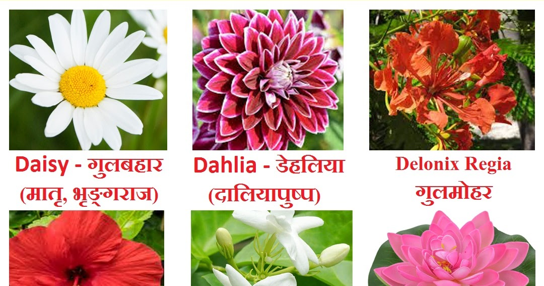 Flowers Name In Hindi Phoolon Ke Naam Sanskrit And English With Chart