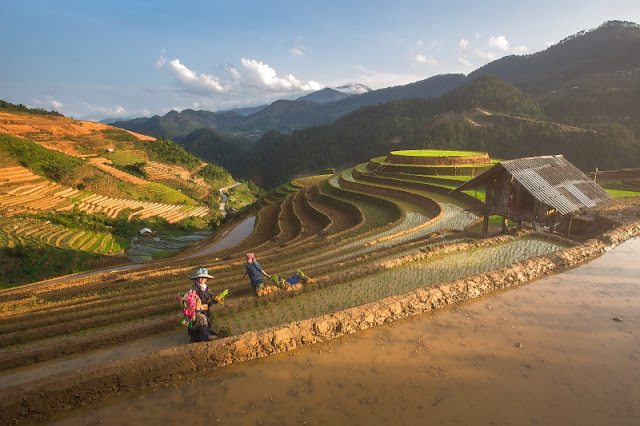 The joy of the ethnic minority in Mu Cang Chai in the harvest of rice 1