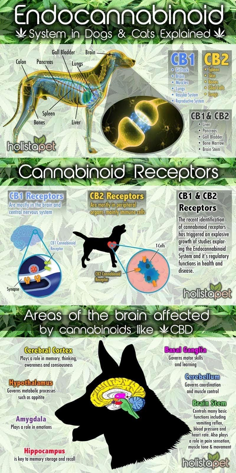 Endocannabinoid system explained in dogs and cats #infographic