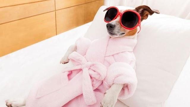 Πώς να κάνετε μασάζ στο σκυλάκι σας και ποια τα οφέλη