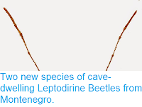 http://sciencythoughts.blogspot.co.uk/2015/03/two-new-species-of-cave-dwelling.html