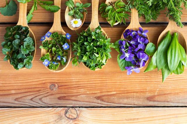 Plantas medicinales para combatir la ansiedad
