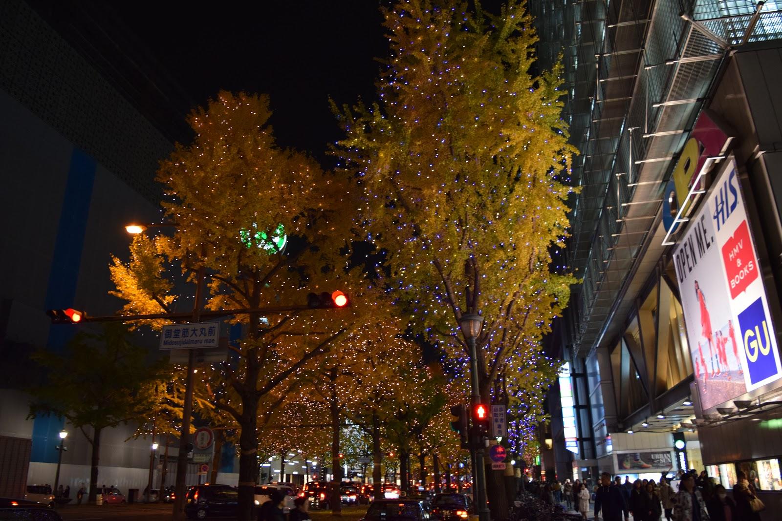 illuminated gingko trees on midosuji, Osaka
