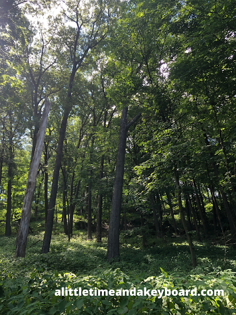 Reveling in the dense forest of Mississippi Palisades State Park.