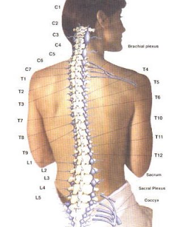 Mengenal Macam-macam Penyakit Tulang