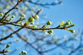 Весна в своём репертуаре