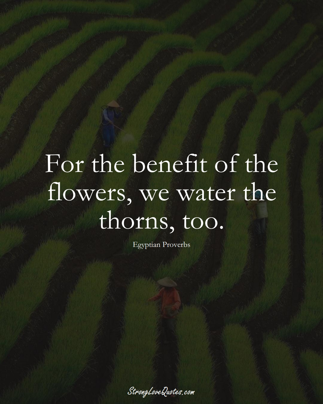 For the benefit of the flowers, we water the thorns, too. (Egyptian Sayings);  #MiddleEasternSayings