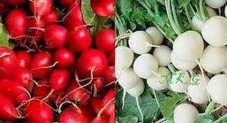 Picture of Round Radishes Red and White